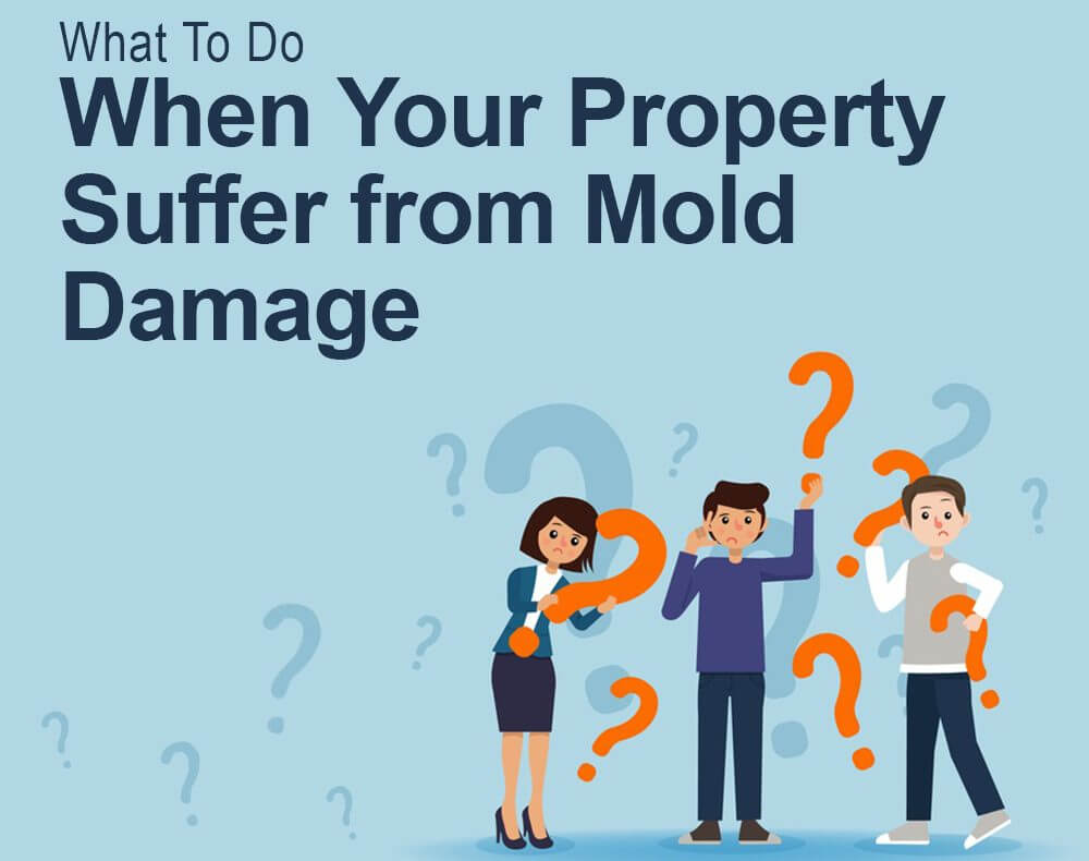 what to do when your property suffer from mold damage-02
