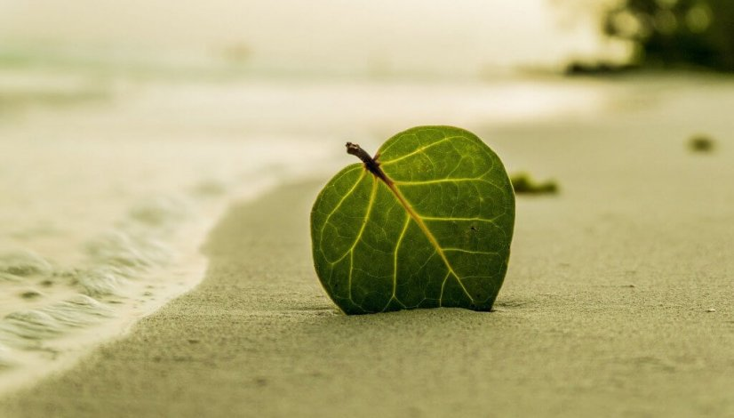 a beach and a leaf in the sand